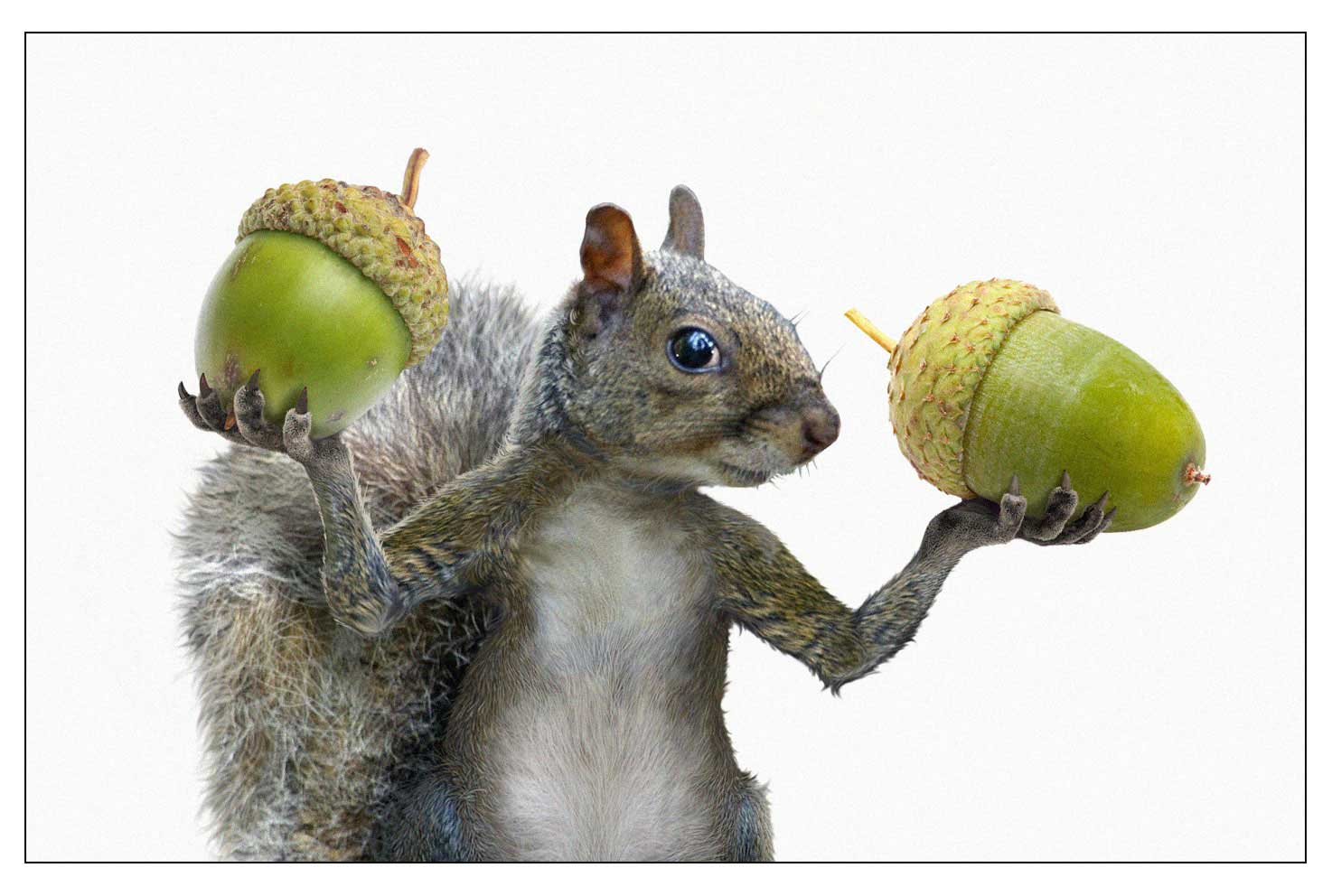 CGI-illustration-Characters_Squirrel-lifting-acorns