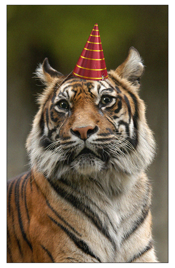 CGI-illustration-Characters_Tiger in a party hat