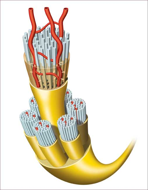 Exploded-View-of-Nerve-Endings-and-Arteries
