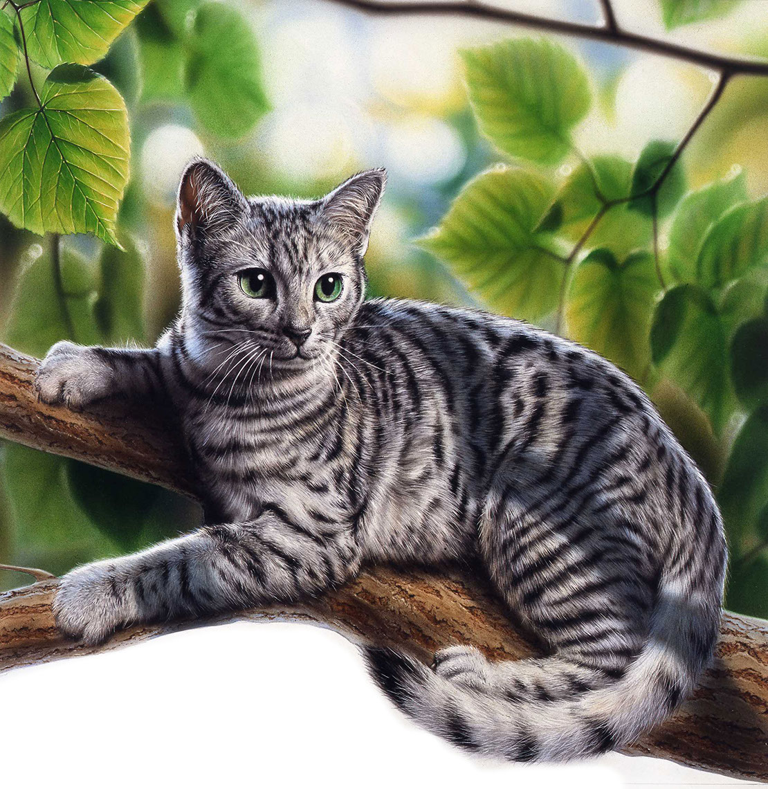 Photo-Imaging_Animals and Nature_Cat in a tree-Frank Neidhardt