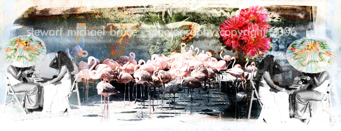 Photo-Imaging_Animals and Nature_Flamingos-Stewart Michael Bruce