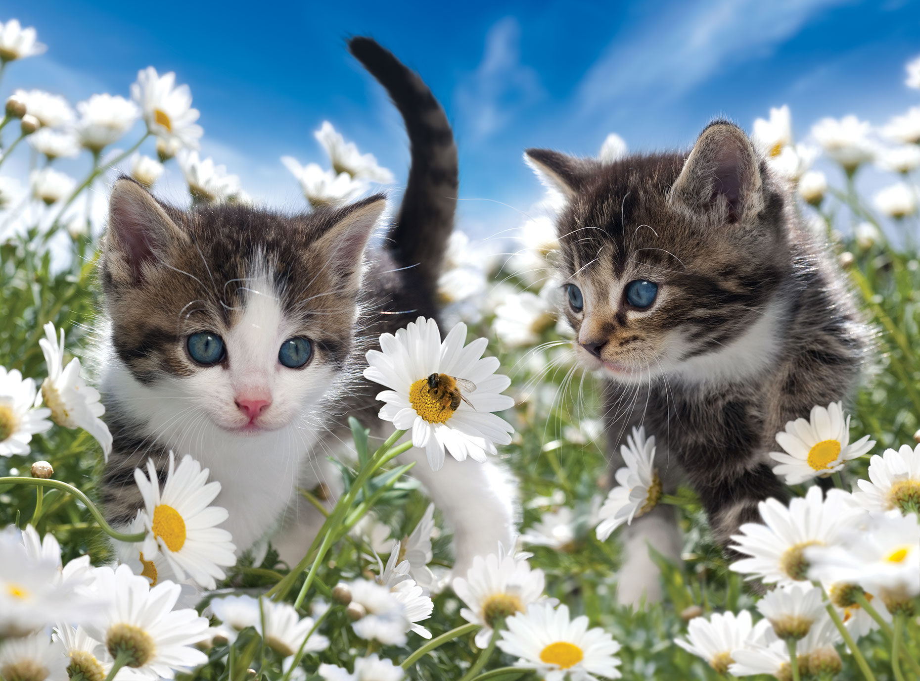 Photo-Imaging_Animals and Nature_Kittens in flowers-Frank Neidhardt