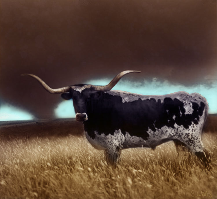 Photo-Imaging_Animals and Nature_Longhorn-Stan Watts