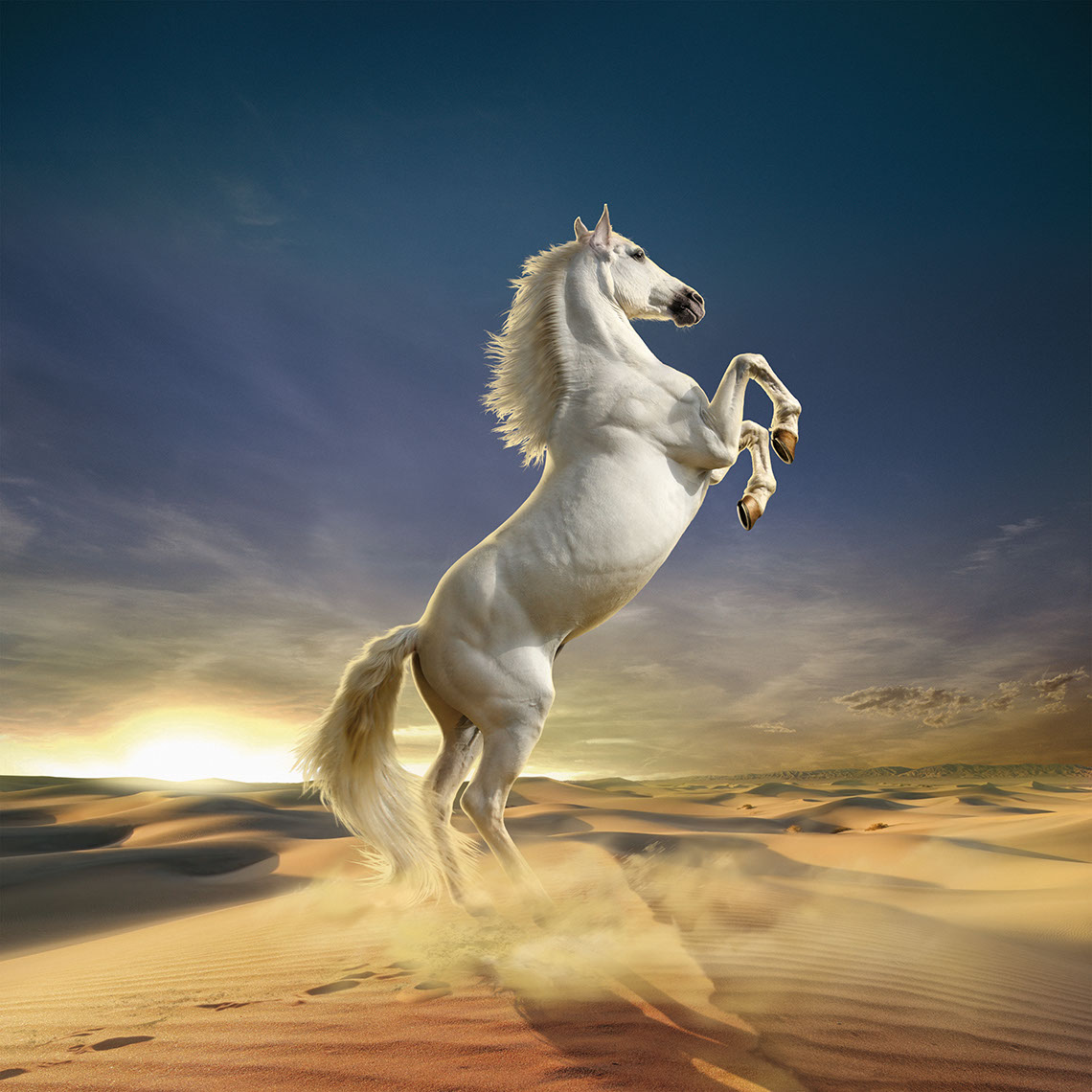 Photo-Imaging_Animals and Nature_White stallion-Frank Neidhardt