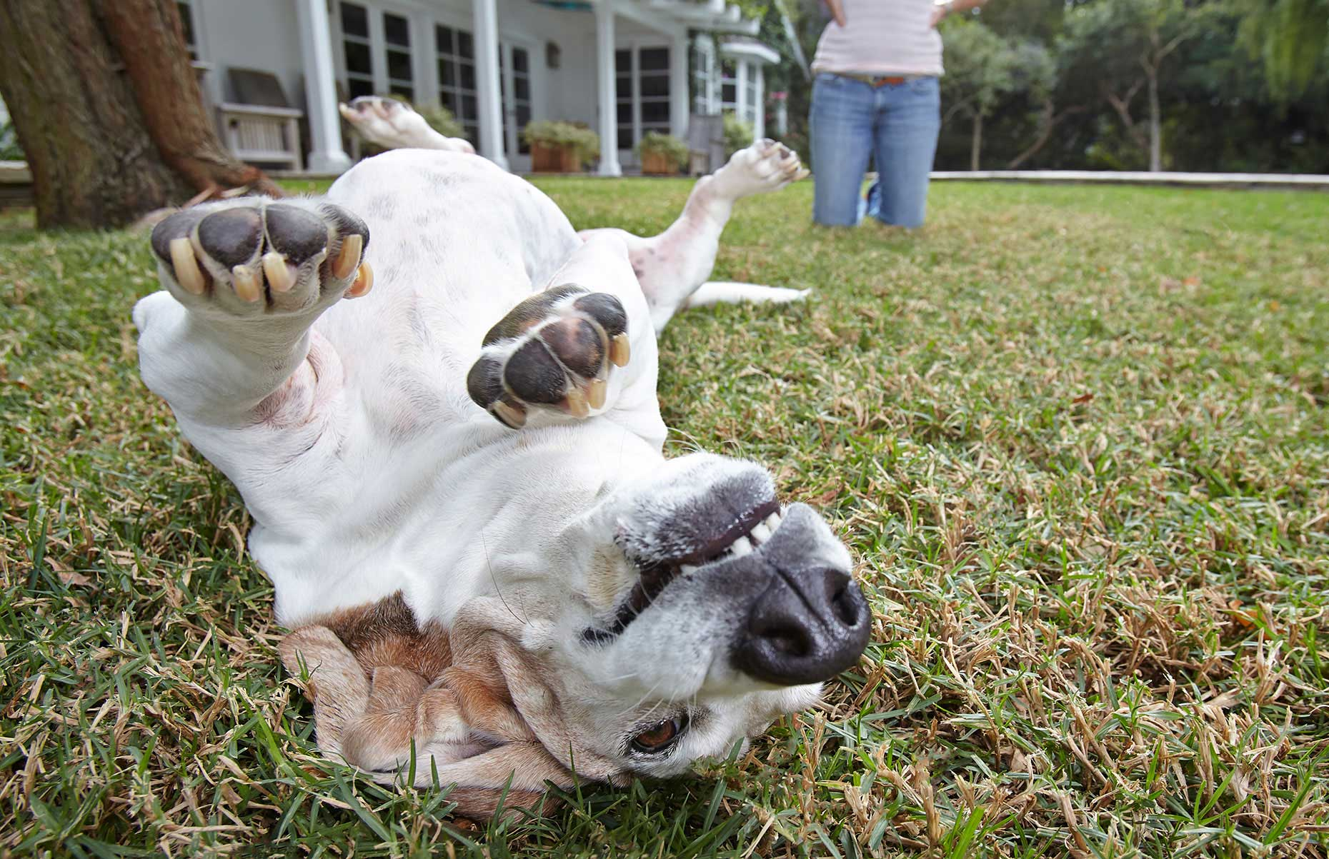 Photography_Family and Home_Dog Rolling Around in Grass-Tony Garcia