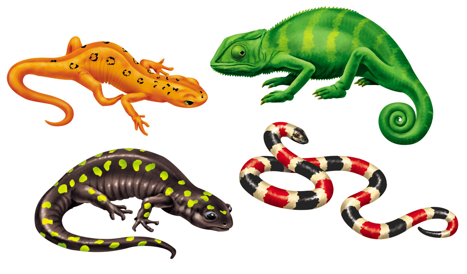 Rick Grayson_Animals_Reptiles