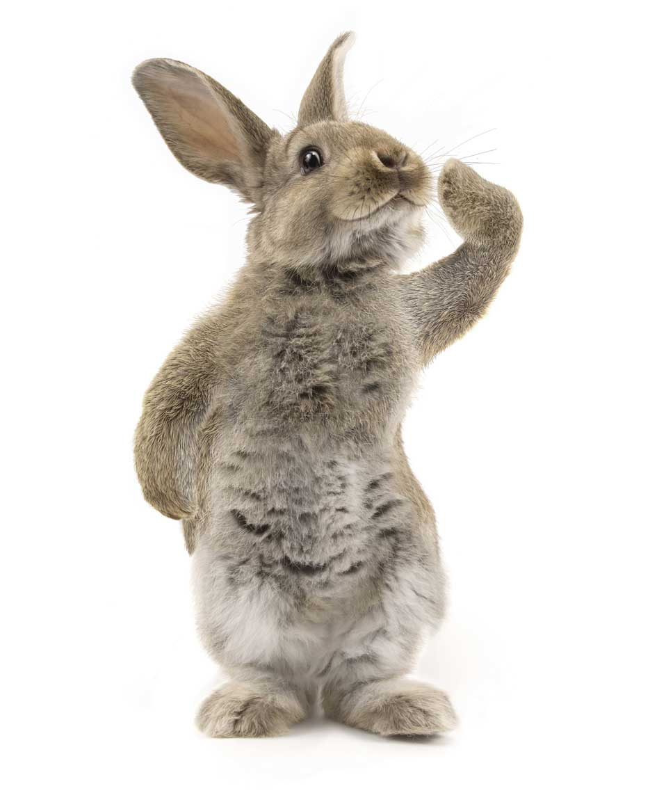 cgi-rendered-animals-realistic animated standing rabbit waving hello