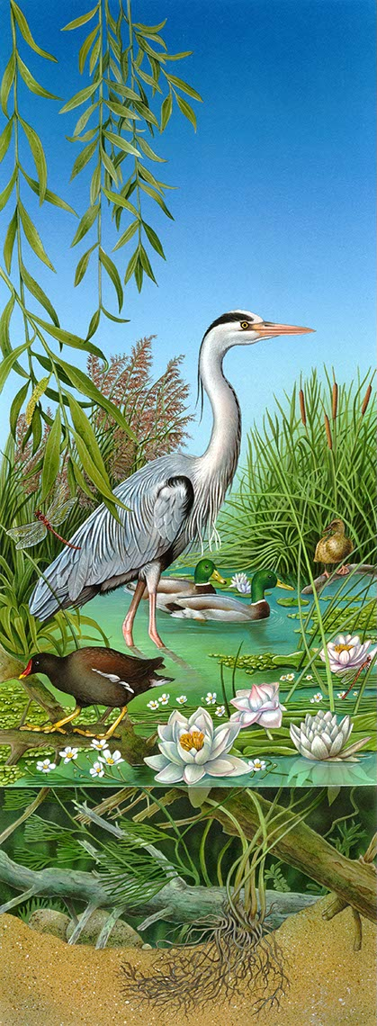 fiammetta-dogi-animals-aareps-heron-in-tidalpool-water-cutaway