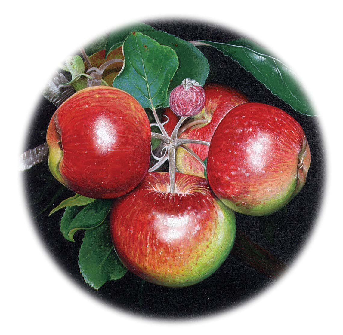 fiammetta-dogi-botanicals-aareps-apples on tree