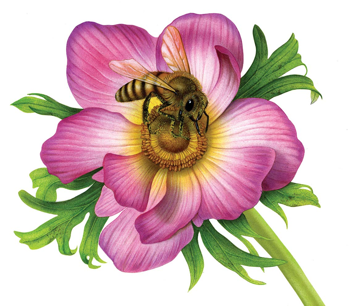 fiammetta-dogi-botanicals-aareps-flower-and-bee