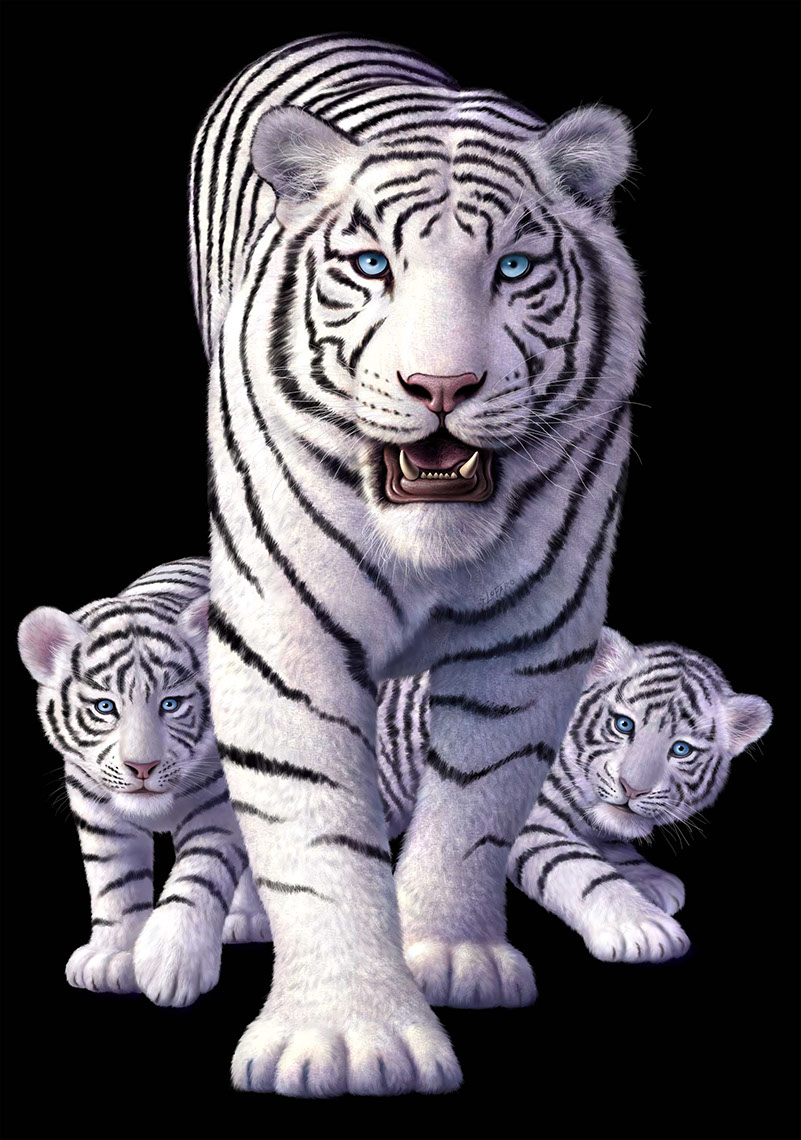 illustration-Animals_White tiger-Jerry LoFaro