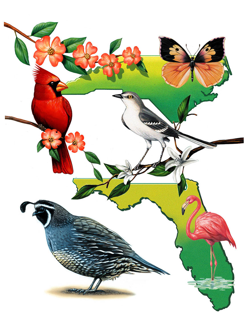 illustration-Animals and Nature_Birds and flowers of florida and north carolina-Impressa