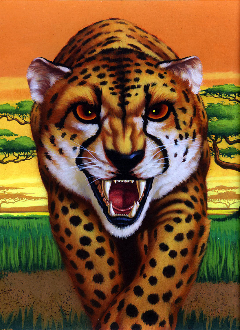 illustration-Animals and Nature_Cheetah-Shawn McKelvey