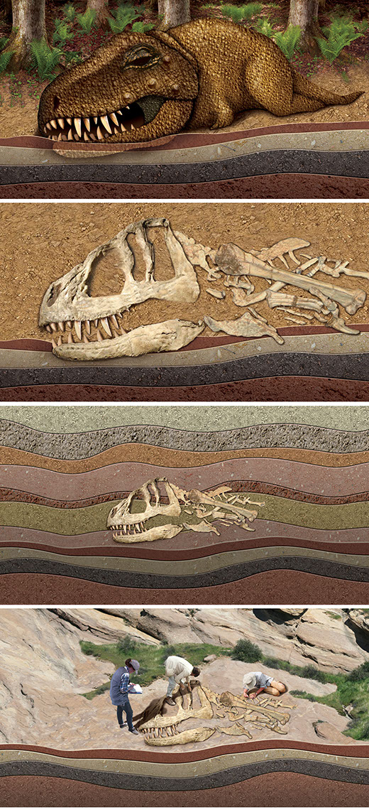 illustration-Animals and Nature_Fossilization-Bill-Graham