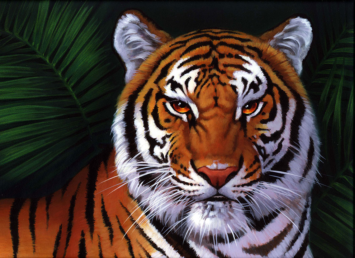 illustration-Animals and Nature_Tiger-Shawn McKelvey