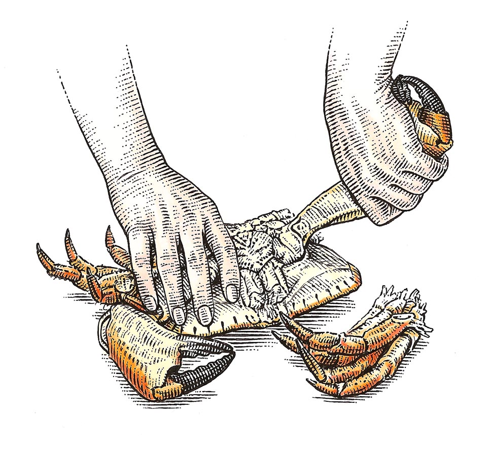 illustration-Crab-by-Dave Hopkins