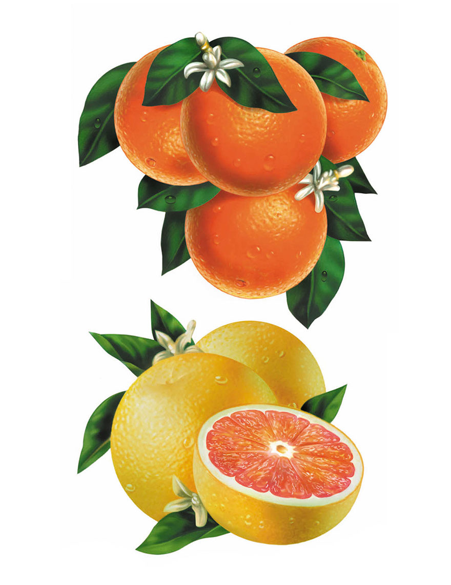 illustration-Food and Packaging_Orange and grapefruit-Impressa