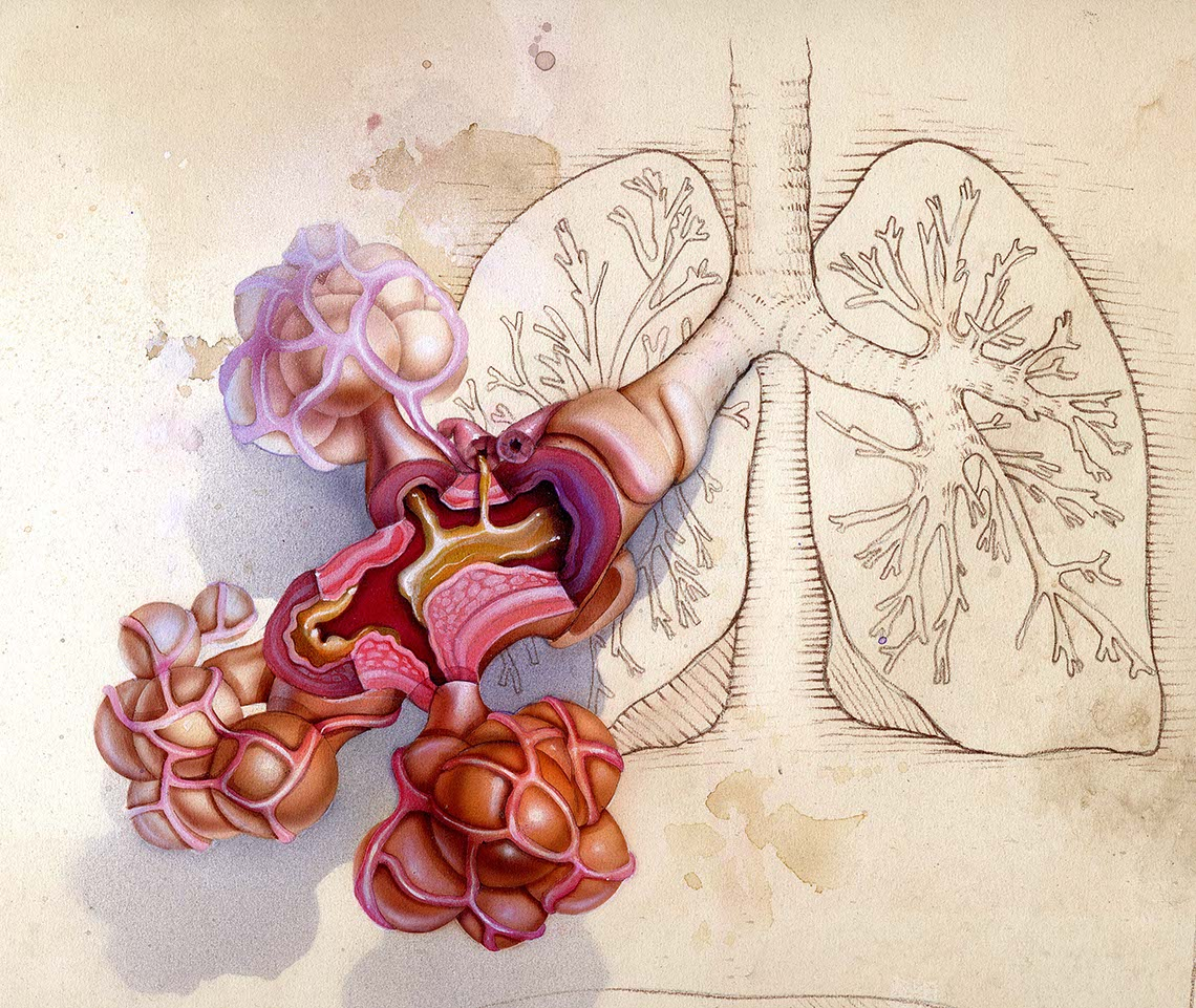 illustration-Medical_Alveoli-Bonnie Hofkin
