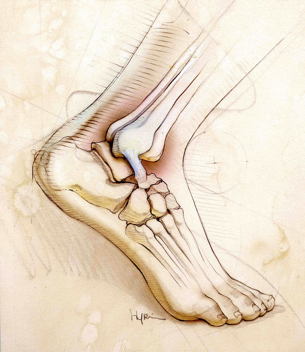 illustration-Medical_Foot-Bonnie Hofkin