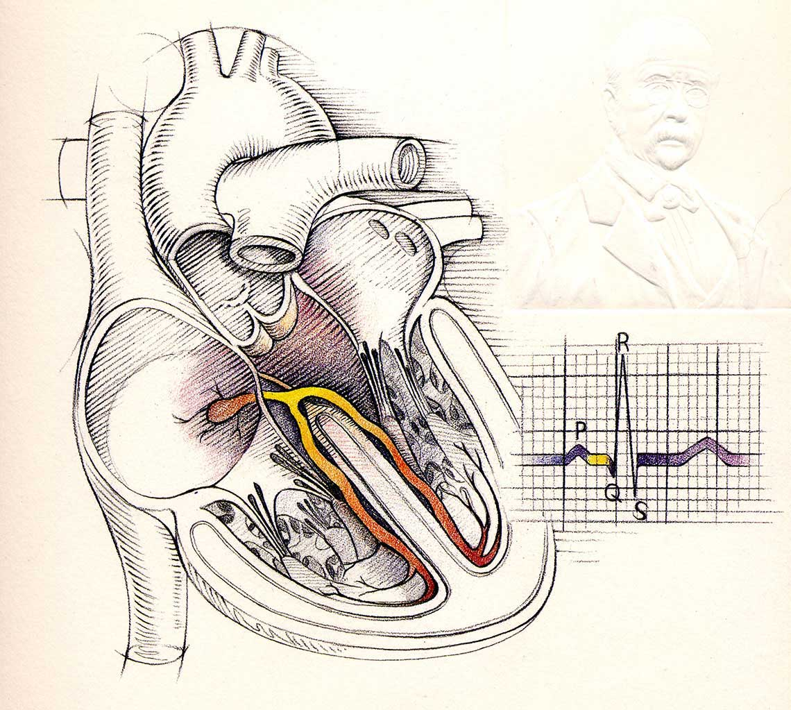 illustration-Medical_Heart-Bonnie Hofkin