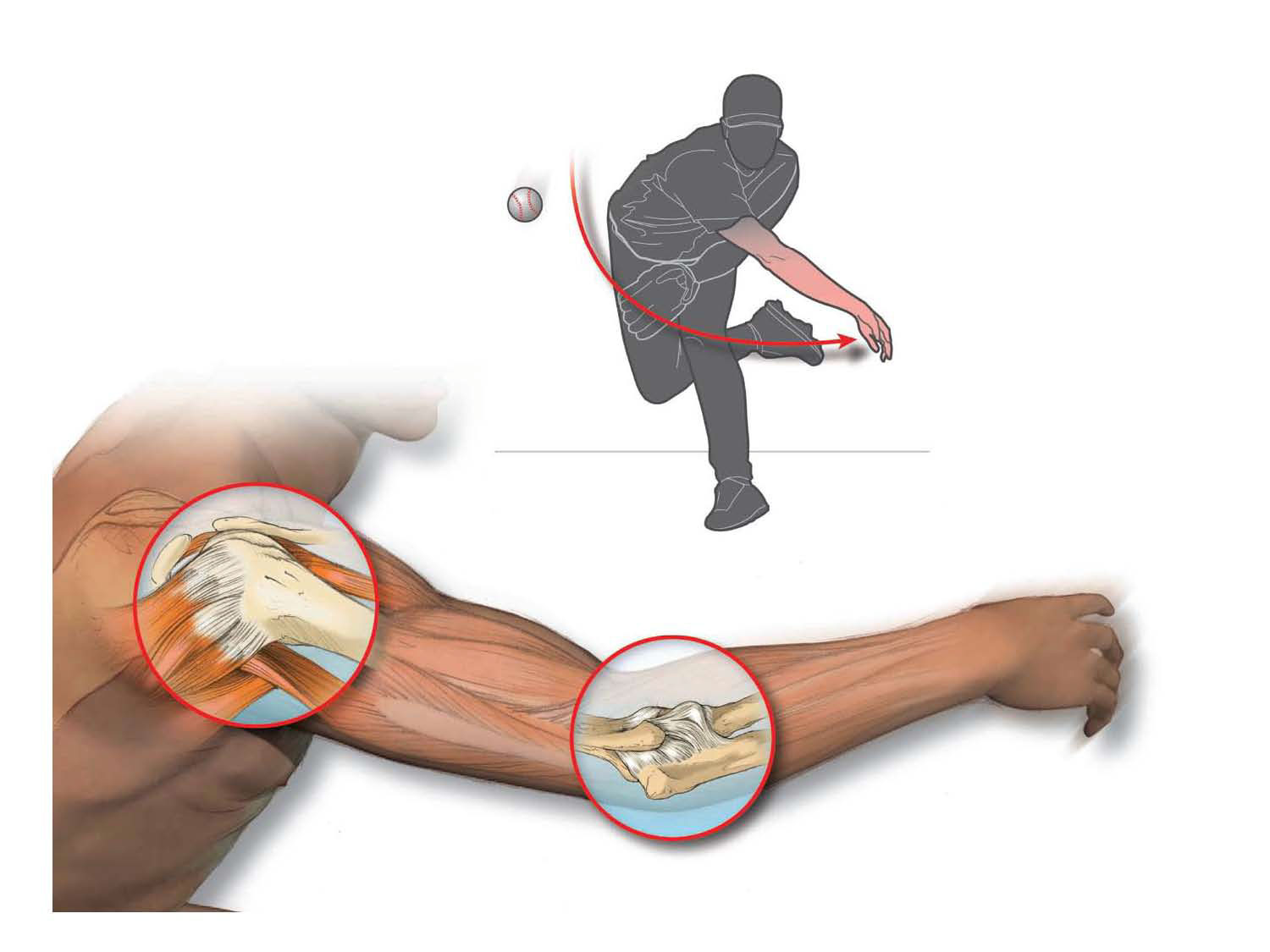 illustration-Medical_Shoulder and elbow motion for throwing a ball-Matt Zang