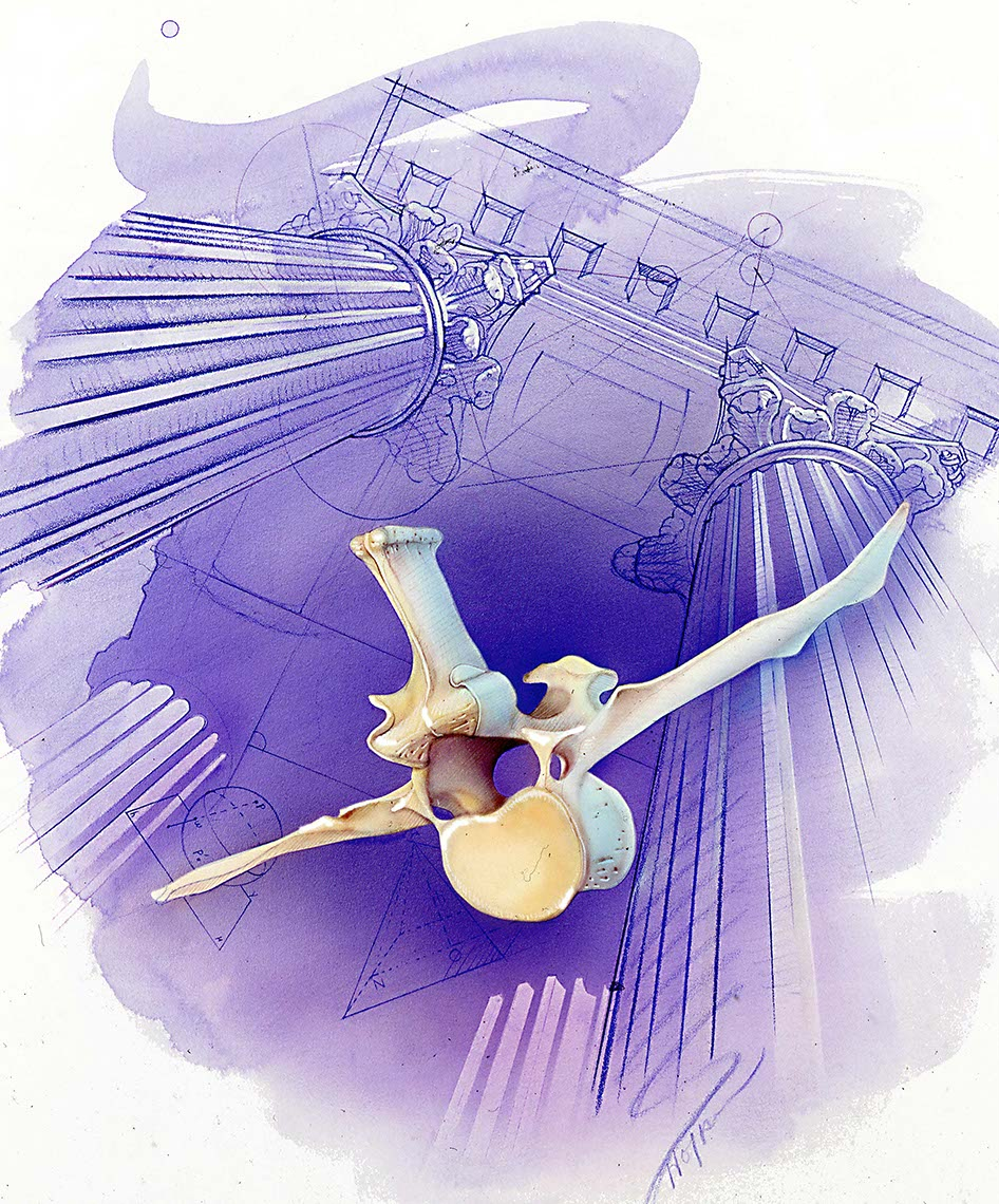 illustration-Medical_Vertebra-Bonnie Hofkin