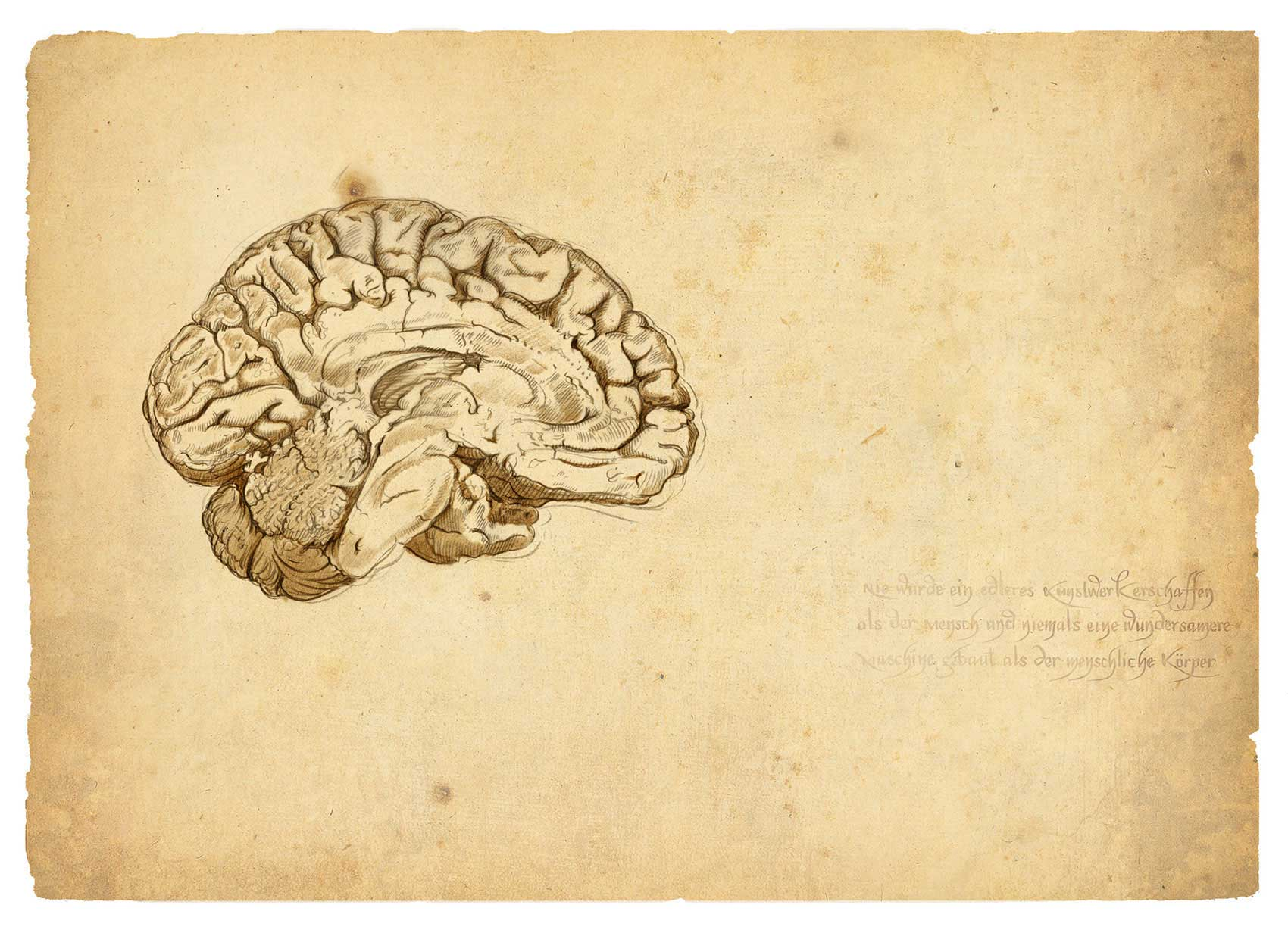 illustration-Retro_DaVinci-style-brain-cutaway-Pastiche