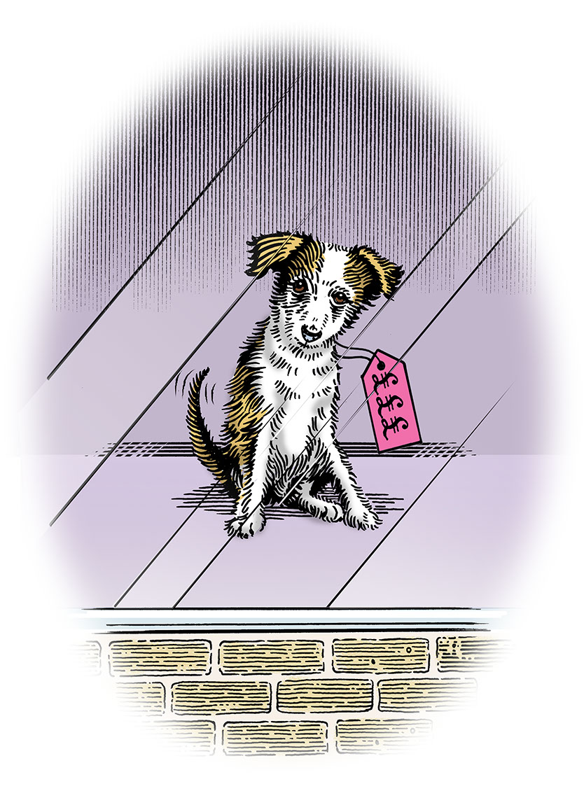 illustration-Retro_Doggie in window-Pastiche