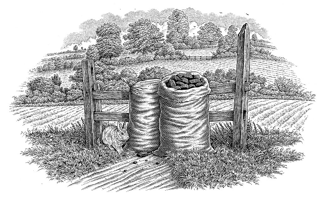 illustration-bw-etching-linework-coal sacks-Dave Hopkins