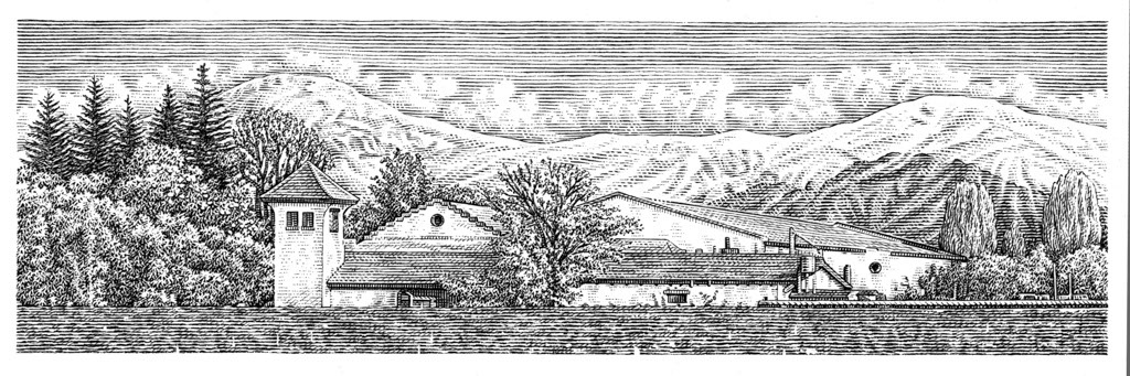 illustration-bw-etching-linework-scafe vineyards-Dave Hopkins