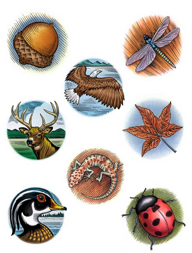 illustration-food-icons-etching-acorn-eagle-leaf-duck-ladybug-Garth Glazier