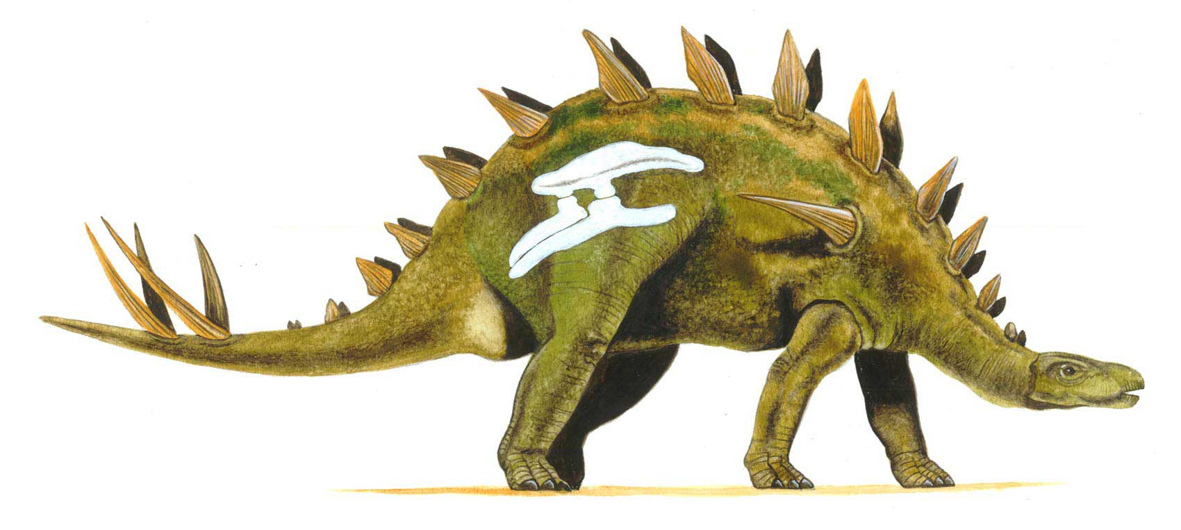 illustration-realistic-animals-dinosaur-stegosaurus