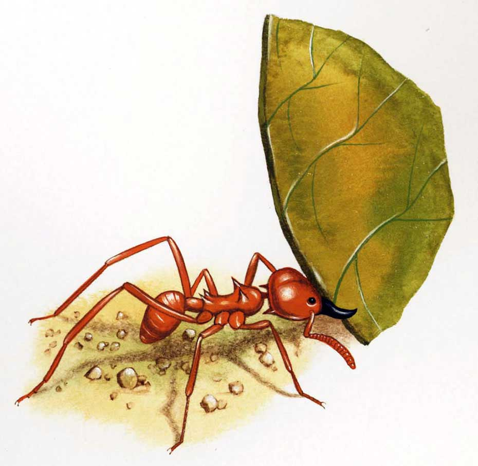 illustration-realistic-animals-insects-Ant