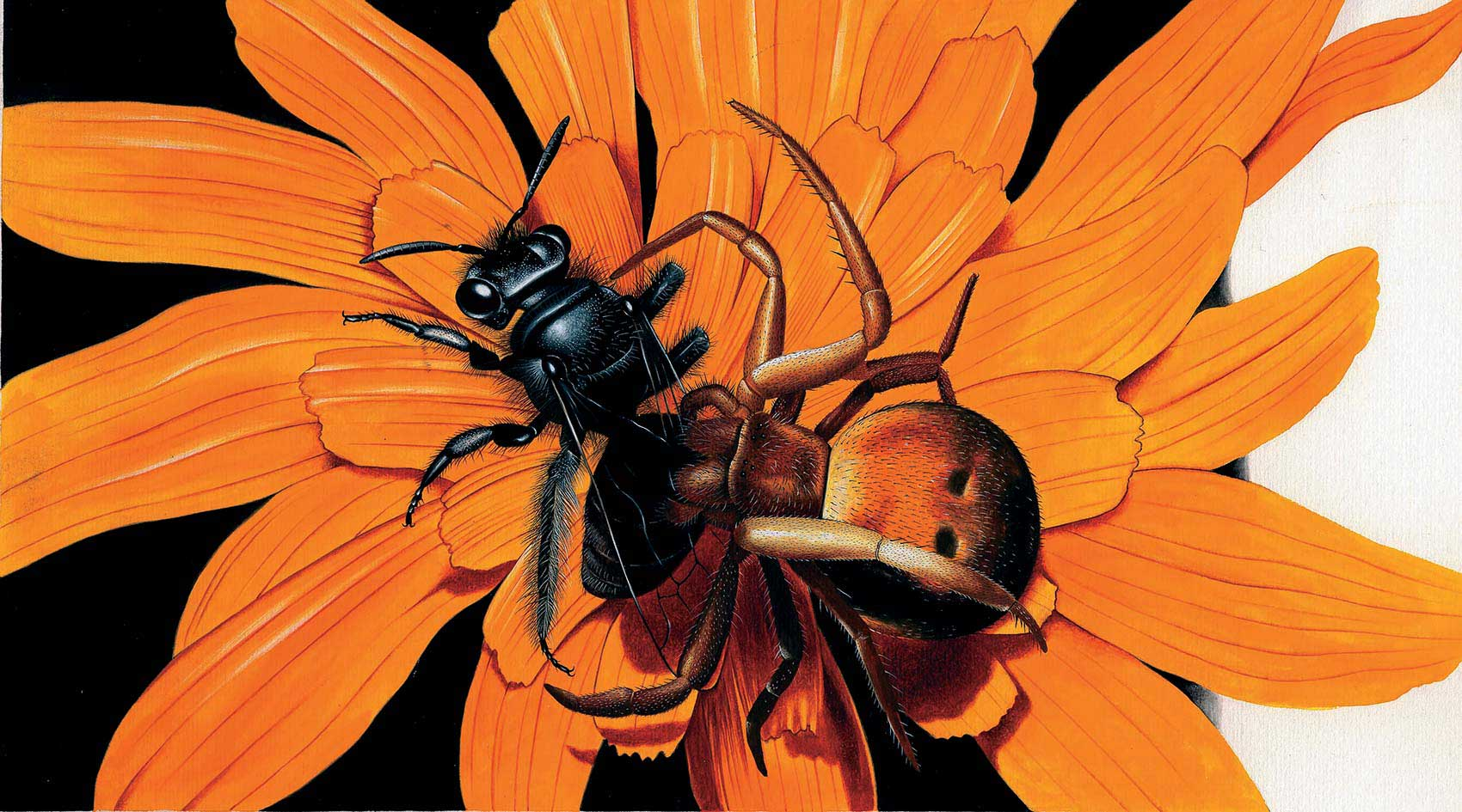 illustration-realistic-animals-insects-spider