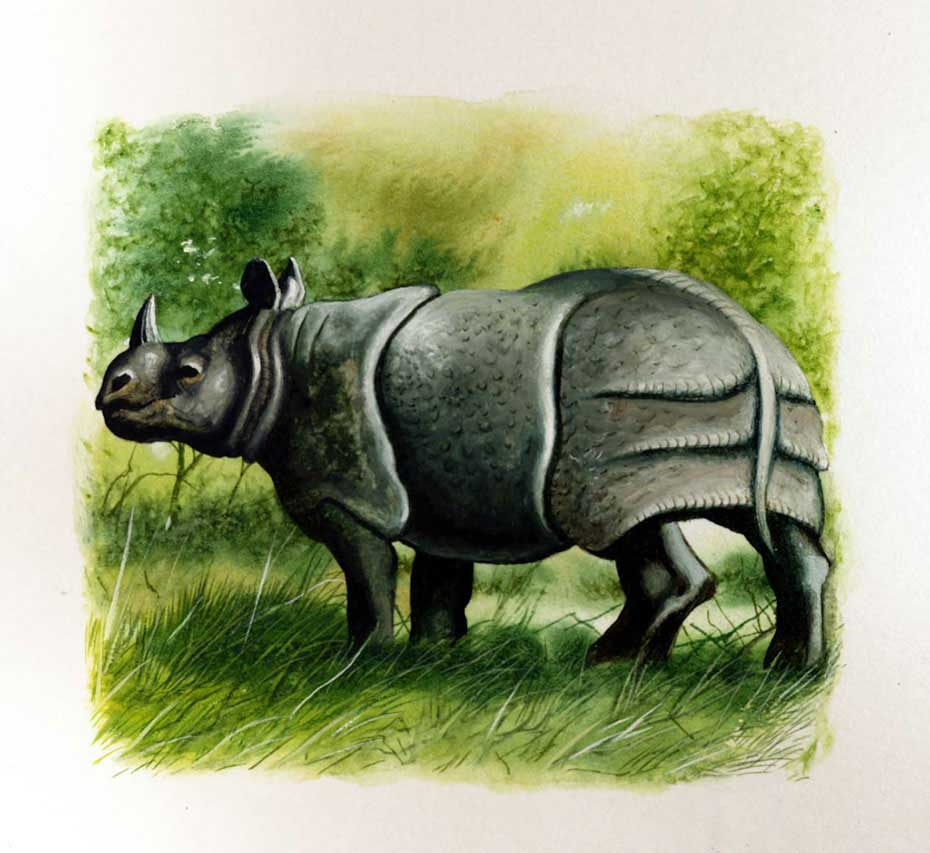 illustration-realistic-animals-rhino
