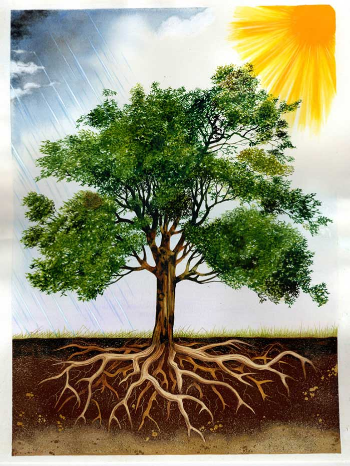 illustration-realistic-landscapes-tree-and-roots