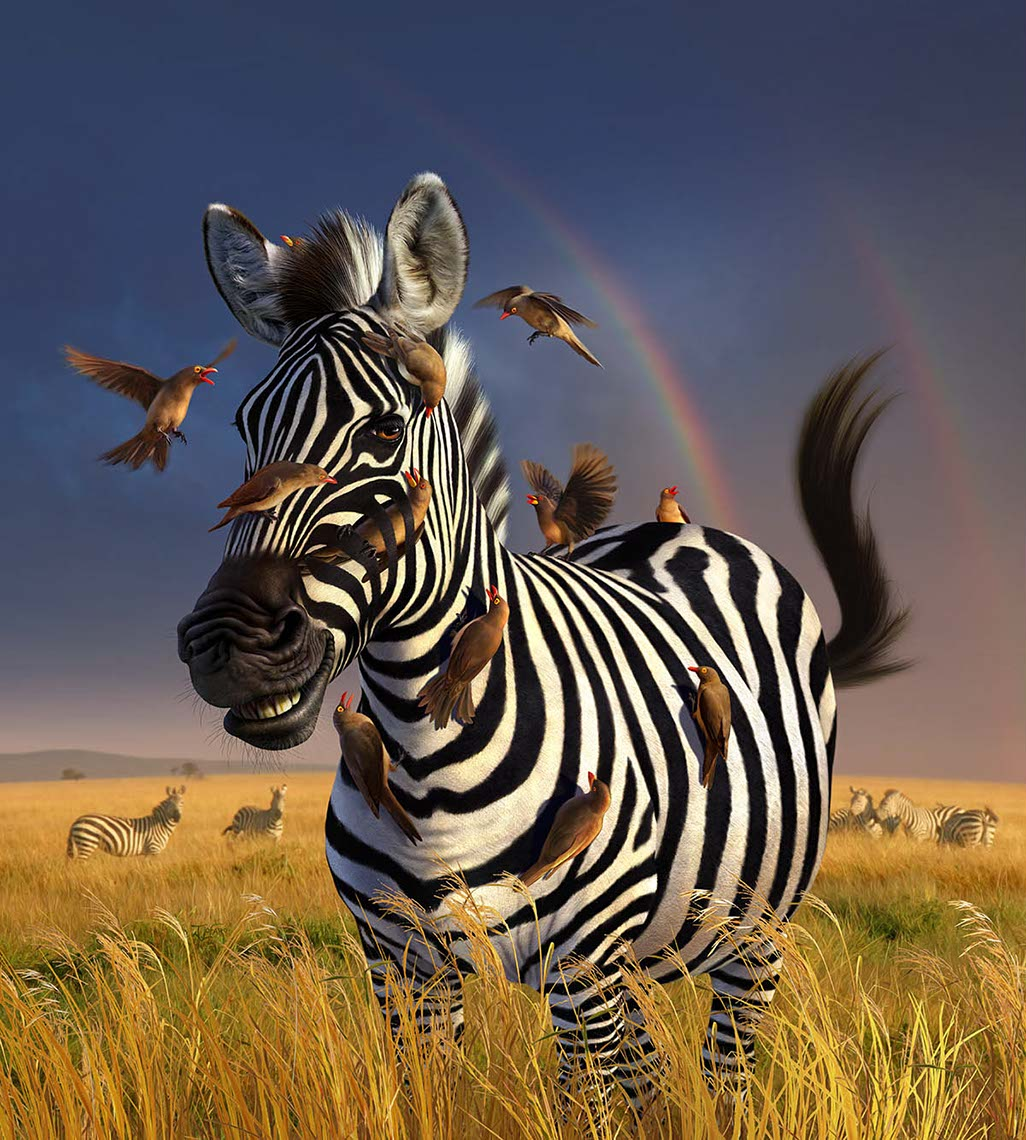 illustration-zebra jailbird surrounded by flying hummingbirds on african plains-Jerry LoFaro