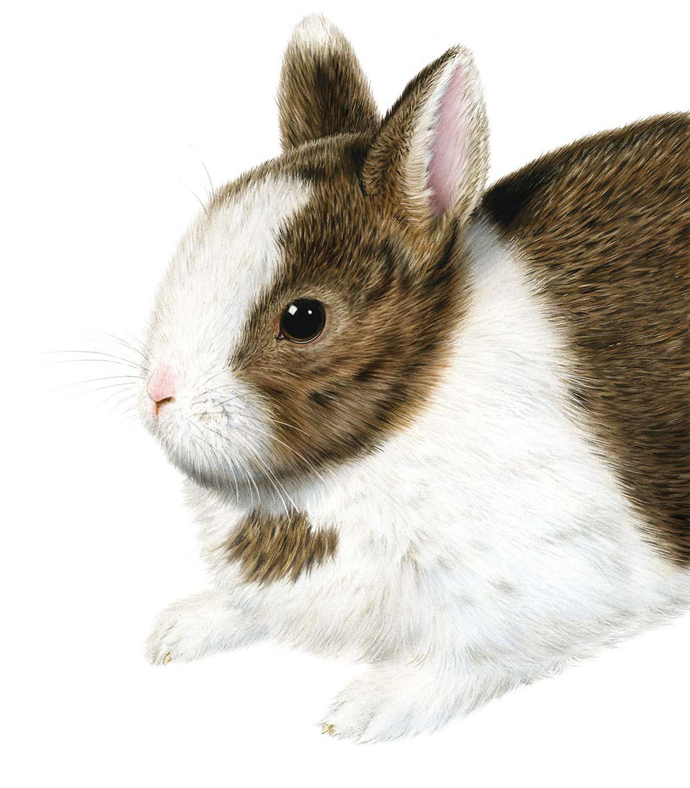 photo-imaging-realistic cute bunny rabbit portrait-Frank Neidhardt